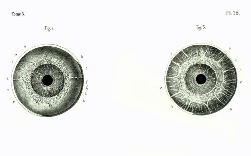 Microcopic Eye anatomy, 1844