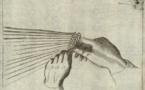 L'art et l'artisanat par William Morris